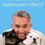 Как воспитать идеальную собаку — Скачать бесплатно