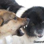 5 советов как отучить собаку кусаться