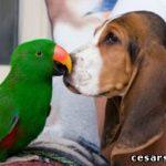 Если бы я мог разговаривать с животными…