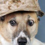 Посттравматическое стрессовое расстройство у собак