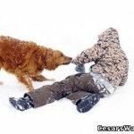 Правила для детей — как избежать укуса собаки