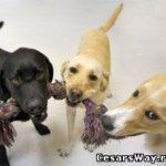 Как избежать нападения собаки на детей