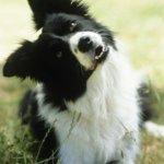 Особенности поведения собак