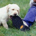 Как отучить собаку грызть. 5 советов