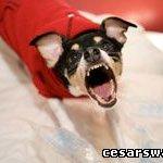5 советов как отучить собаку лаять.