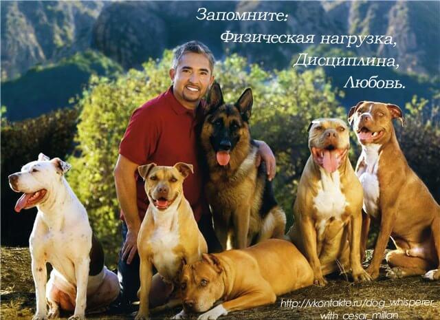 формула для собак