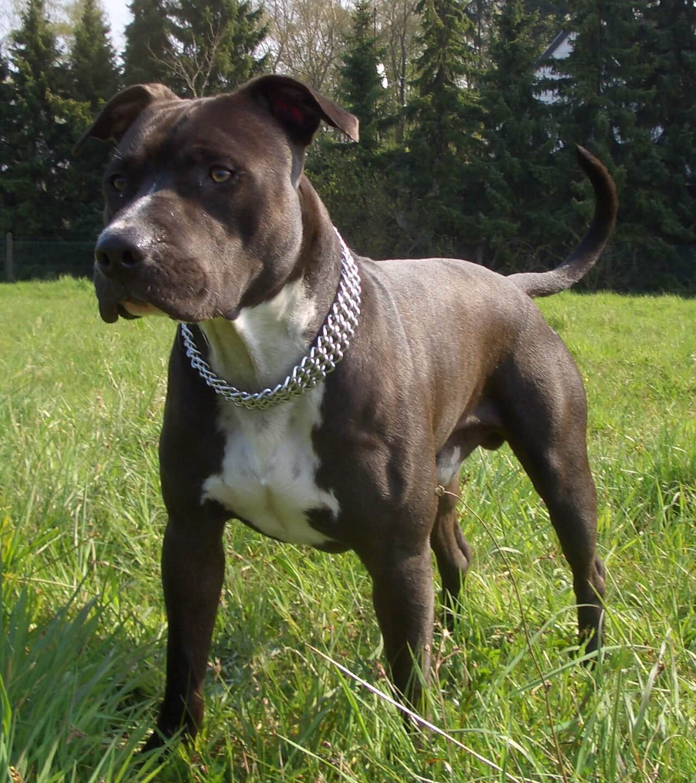 немецкие породы собак с фотографиями