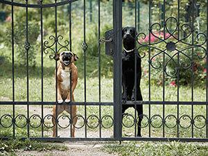 собаки для охраны