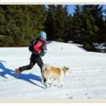 Зимние собачьи забавы: 6 вариантов для плохой погоды