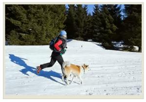 Зимние пробежки с собакой