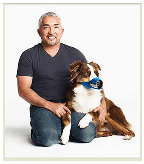 Цезарь Милан с собакой в наморднике