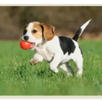 Этапы развития щенков