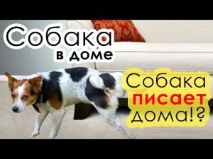 собака метит дома - фото