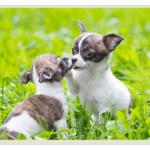 ВАЖНОЕ о стерилизации и кастрации собак