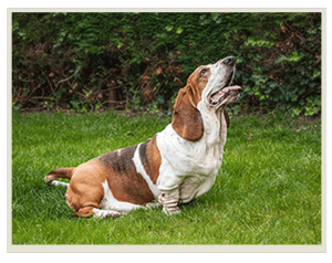 непослушная собака