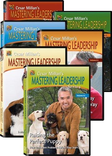 переводчик с собачьего на dvd все серии