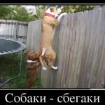 Что делать, если собака убегает? Причины. Как исправить