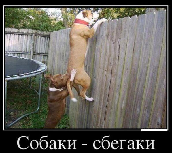 собаки убегают через забор