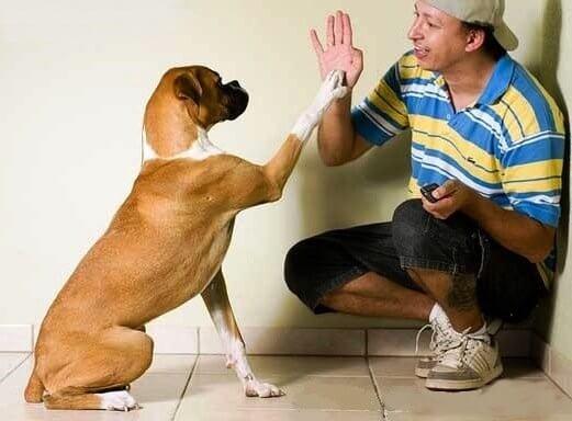 Собака повторяет за хозяином