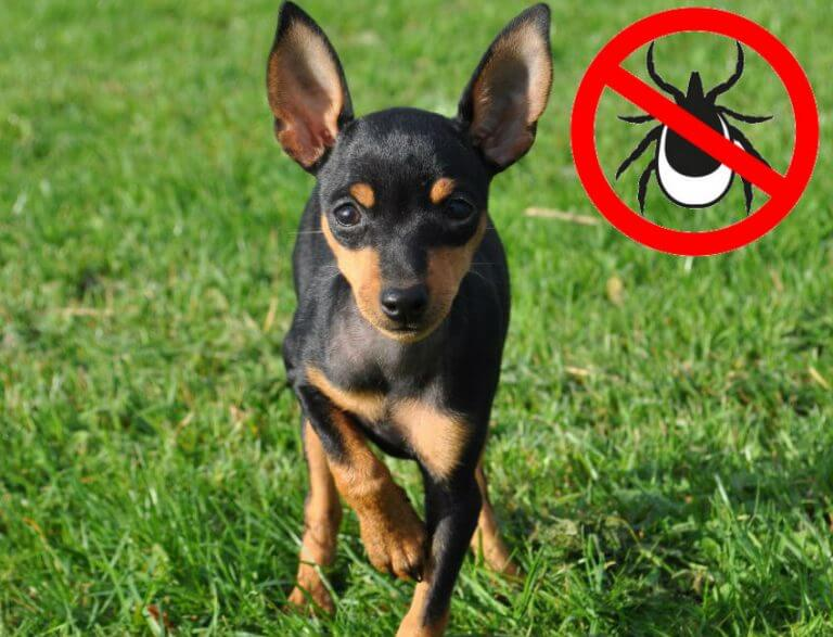 Как защитить собаку от блох и клещей
