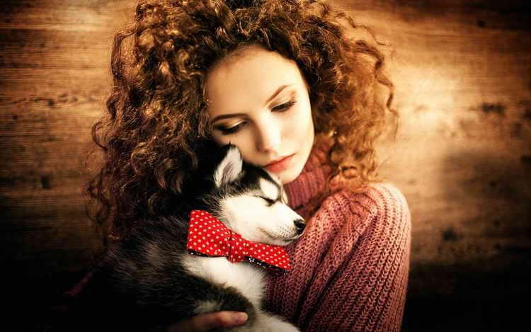 Formation et éducation des chiens de race Husky