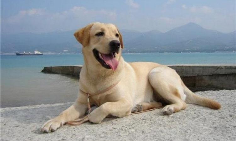 сколько лет живут собаки в домашних условиях