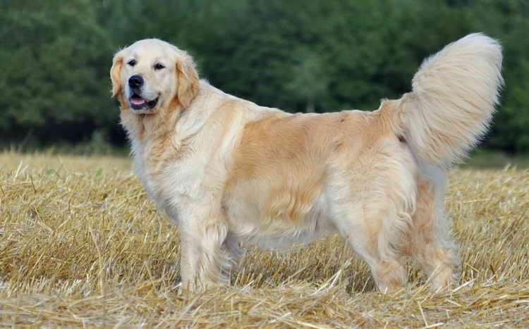 до какого возраста растут собаки дворняги