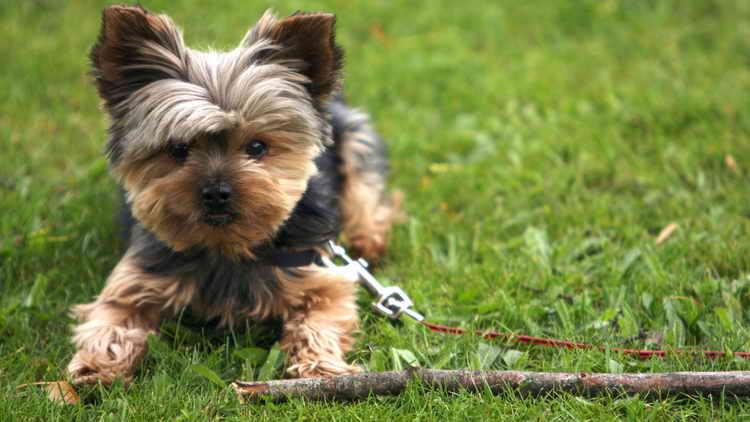 до какого возраста растут собаки средних пород
