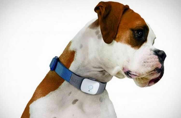 электронный ошейник для собак инструкция