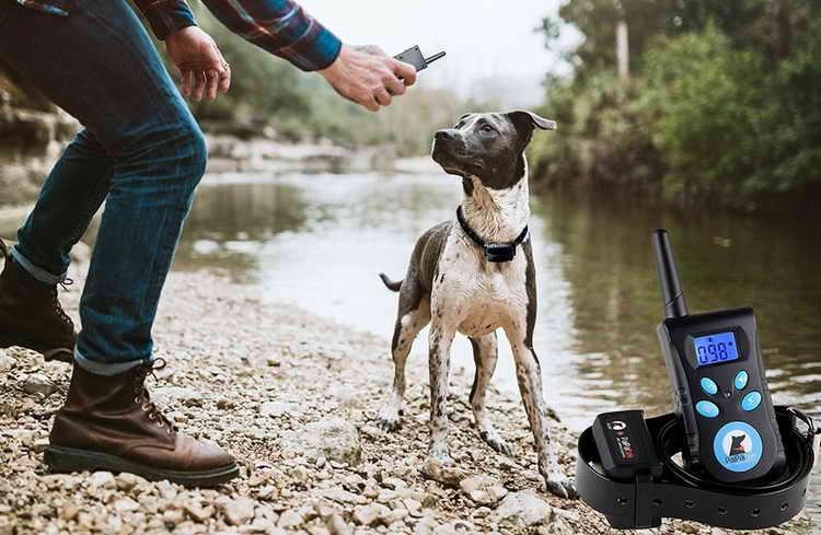 электронный ошейник для собак как работает