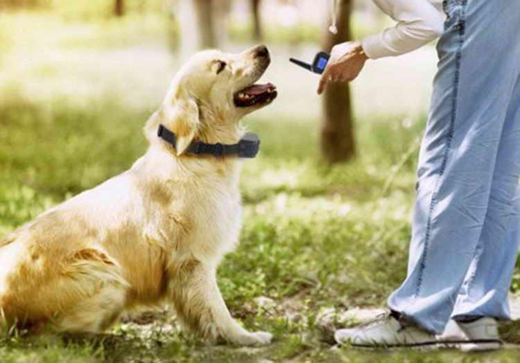электронный ошейник для собак как выбрать