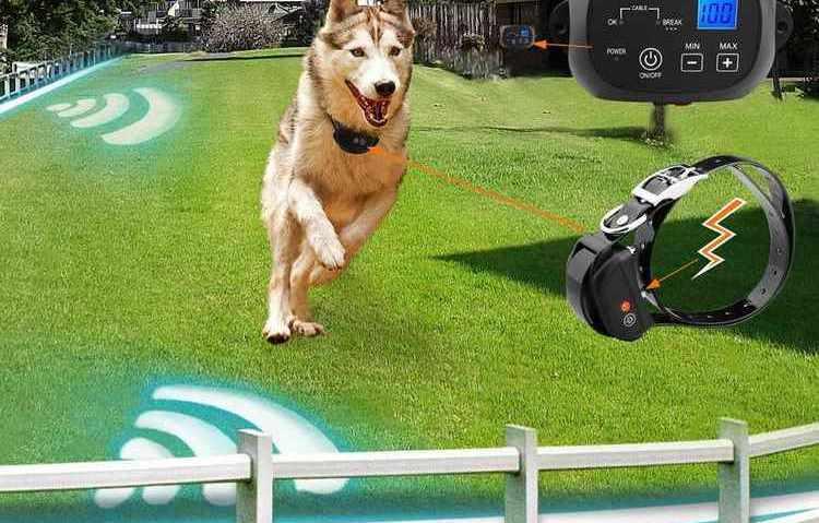 электронный ошейник для собак зачем нужны