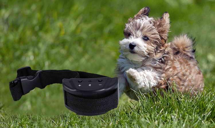 дрессировка собак с помощью электронного ошейника