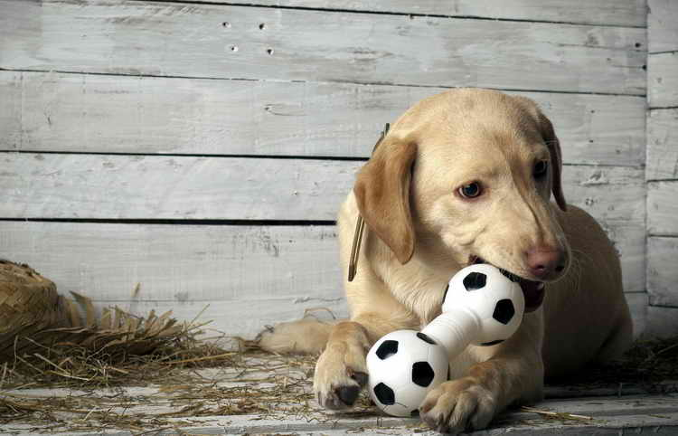 kong игрушка для собак