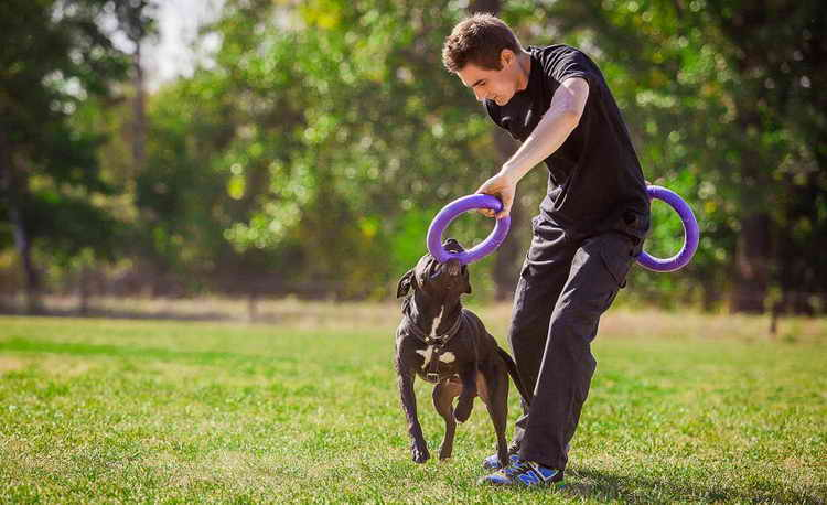 конг игрушка для собак