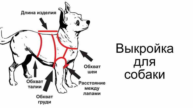жилет для собаки