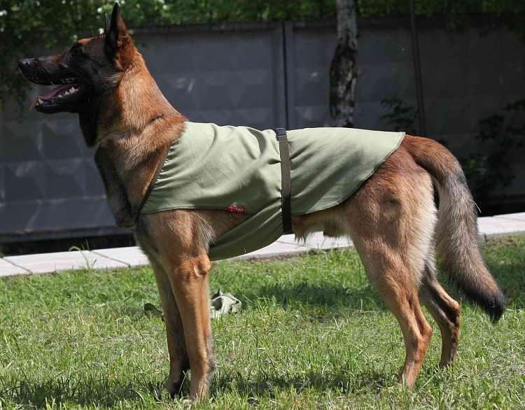 как сшить жилет для собаки