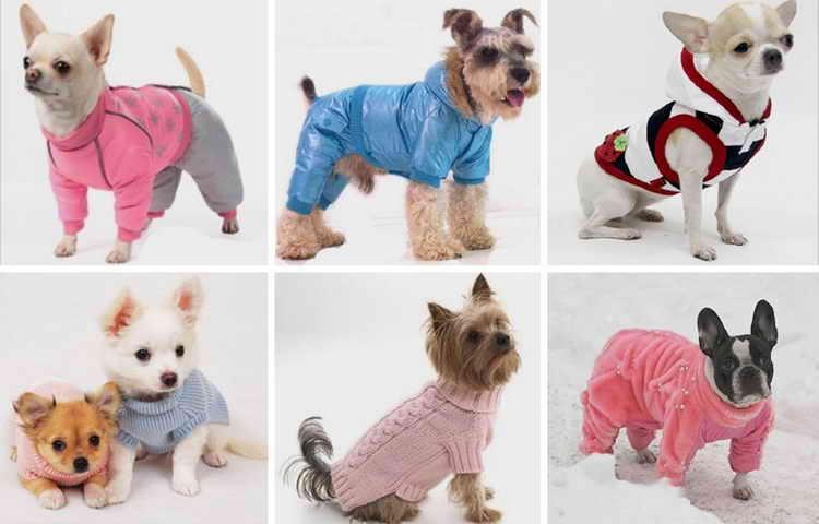как сшить одежду для собак