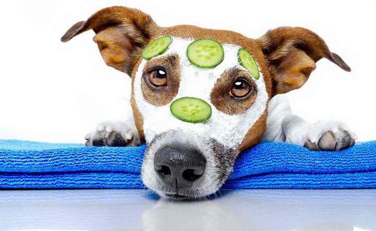 как ухаживать за собакой в квартире