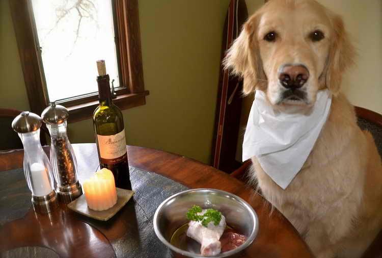 как правильно ухаживать за собакой