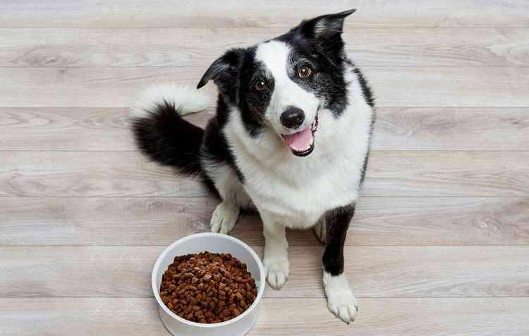 Какие крупы можно давать собакам крупных пород