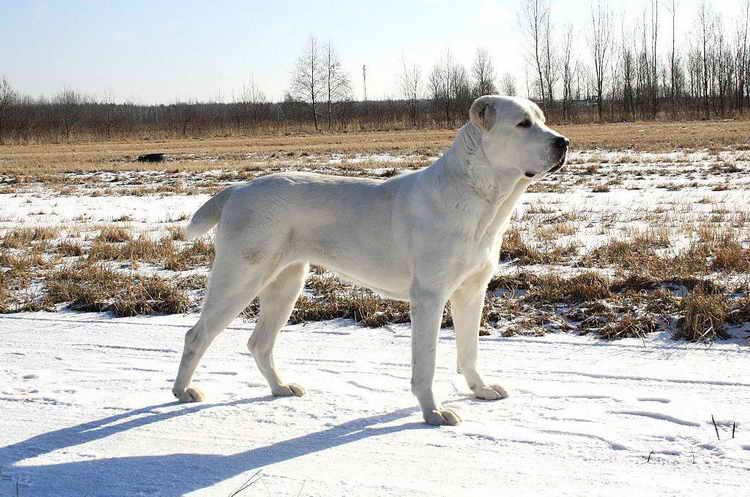 каким именем можно назвать собаку мальчика