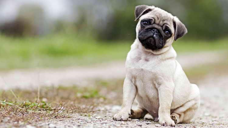 как назвать собаку мальчика маленькой породы