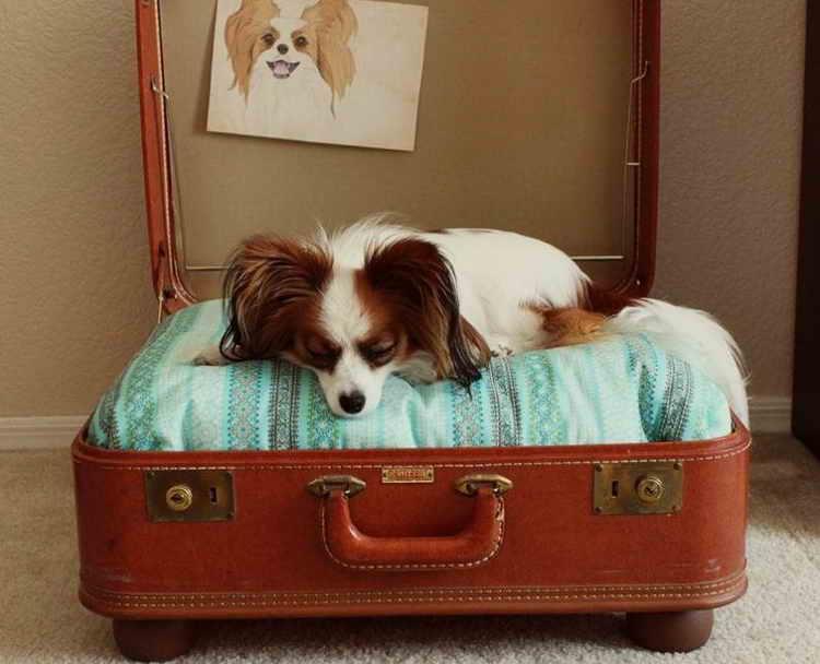 лежаки для собак мелких пород