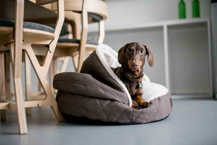 пластиковый лежак для собак