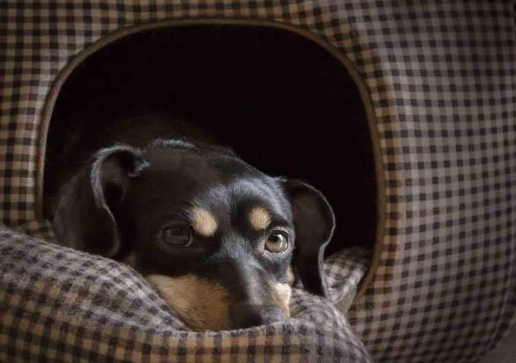 лежак для собаки больших размеров