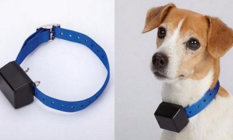 антилай ошейник для мелких собак