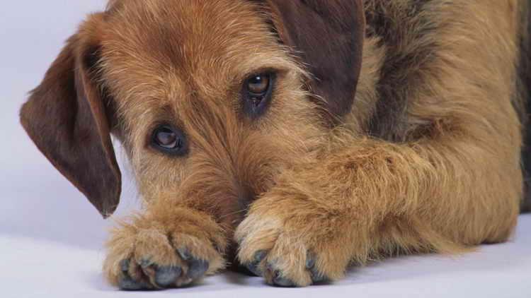 почему собака ест свой кал дома