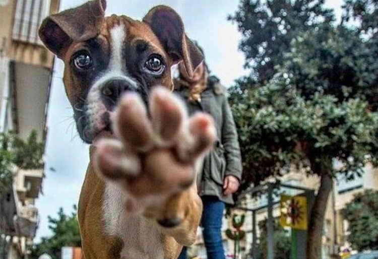 почему собака ест свой кал причины