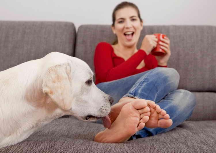почему собака лижет ноги